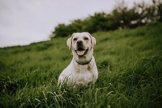 Happy dog sitting in long grass